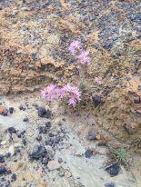 Blog flowers